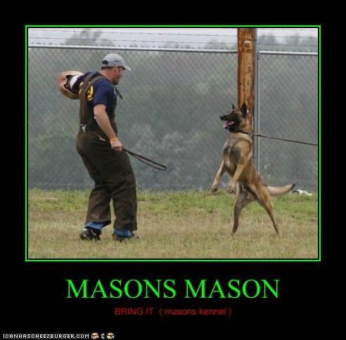 MASONS MASON BRING IT ( masons kennel )