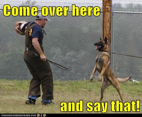 come over here german shepherd police police dog training - 5668221952