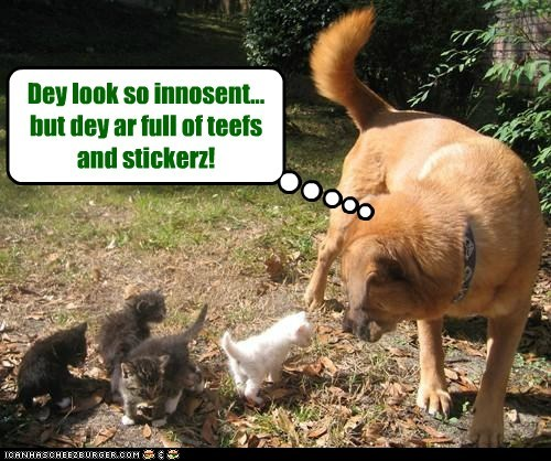 cat,innocent,kitten,misleading,mixed breed,whatbreed