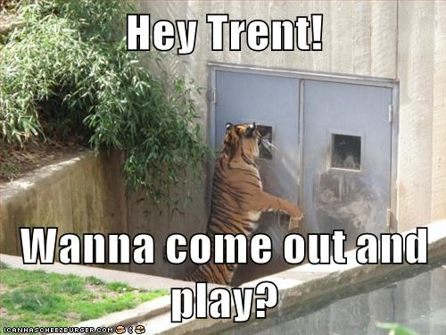 animals,come out and play,hang out,play,tiger