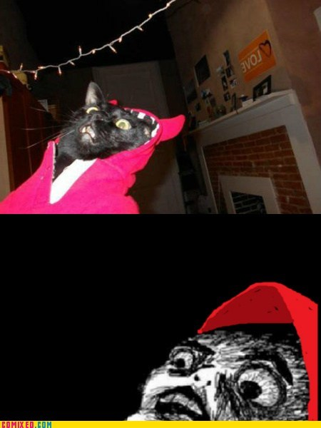catify hoodie meme omg the internets - 5670057472