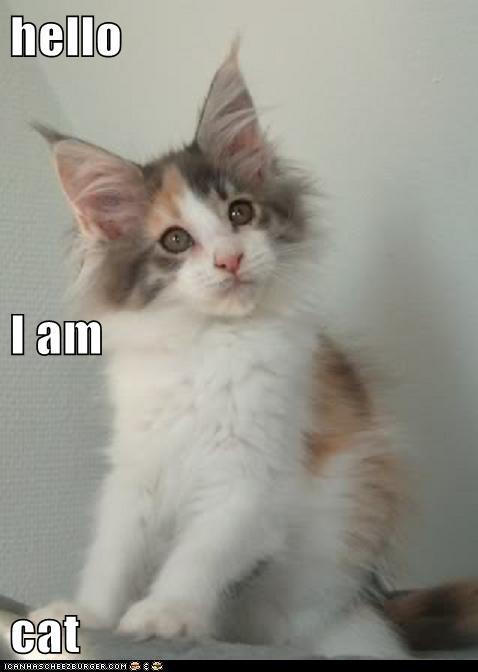 hello I am cat