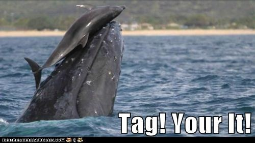 animals,dolphin,tag,whale,youre-it