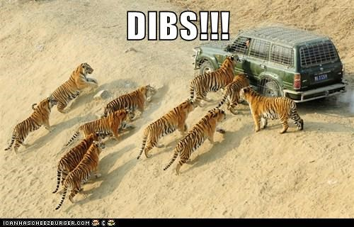 animals,delicious,dibs,eat,human flesh,hungry,tigers