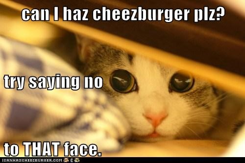 Cheezburger Image 5670803712