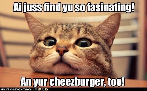 Cheezburger Image 5670869248