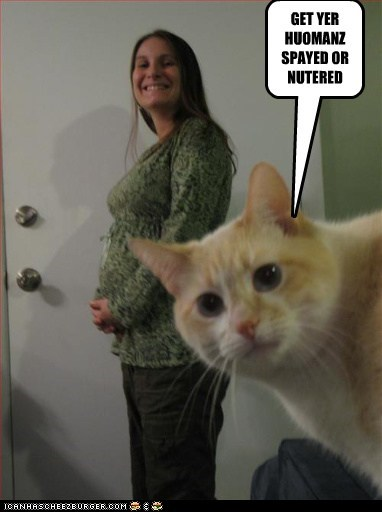 advice,caption,captioned,cat,get,humans,neutered,pregnant,psa,spayed,woman