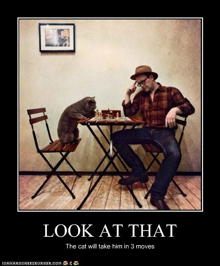 LOOK AT THAT The cat will take him in 3 moves