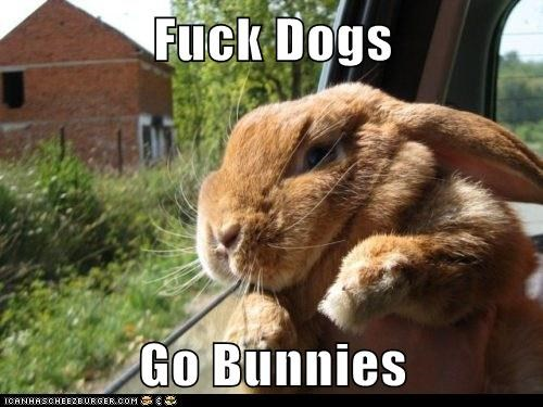 Fuck Dogs Go Bunnies