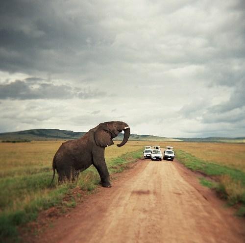 On a Safari Tour