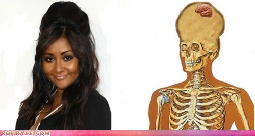 celeb funny Hall of Fame jersey shore snooki TV - 5671250944
