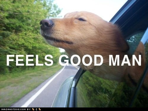 awesome car Feels Good Man good Good Times head out the window labrador retriever window - 5671478784