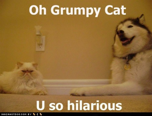 cat,Grumpy Cat,happy dog,hilarious,husky,laugh,laughing,mad cat