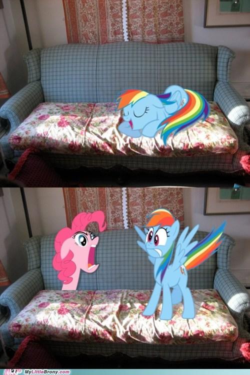 comics cute animals forever IRL pinkie pie rainbow dash - 5671909632