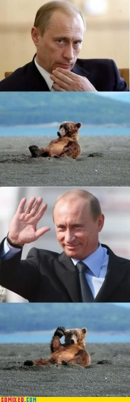 bear,classic,Putin,relaxed,the internets