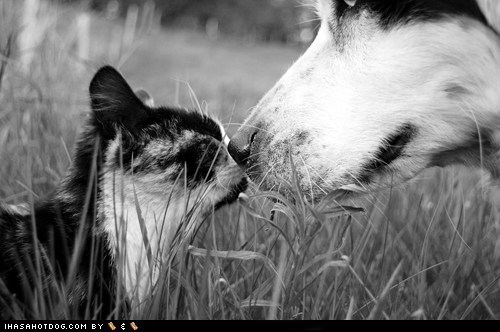 cat,friends,friendship,interspecies friendship,kittehs r owr friends,love,noses,outdoors,touching noses,whatbreed