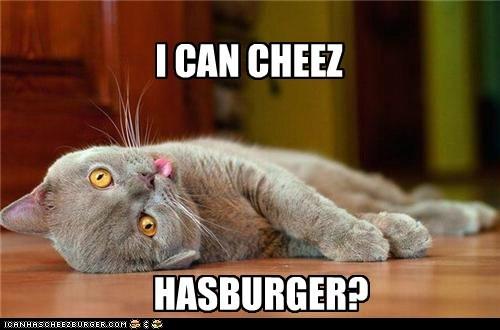 Cheezburger Image 5672527360