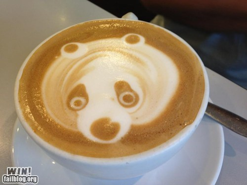 animals,coffee,coffee art,latte art,panda