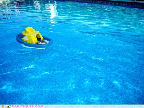 boat floating hedgehog pool pun puns tiny toy unbearably squee water - 5672752896
