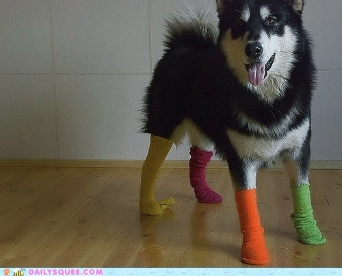 acting like animals,colorful,colors,dogs,dr seuss,fashion,fox in socks,socks,style,superior