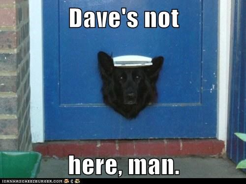 dave daves-not-here door mixed breed not here not home oops stuck stuck in the door whatbreed