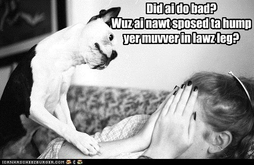 bad dog,boston terrier,first impressions,first impressions fail,humping,leg hump,mother in law,oh no,oops,thats-a-bummer-man