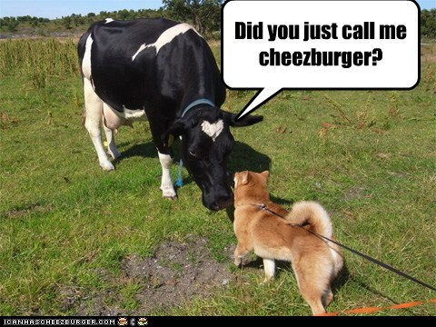 Cheezburger Image 5673374720