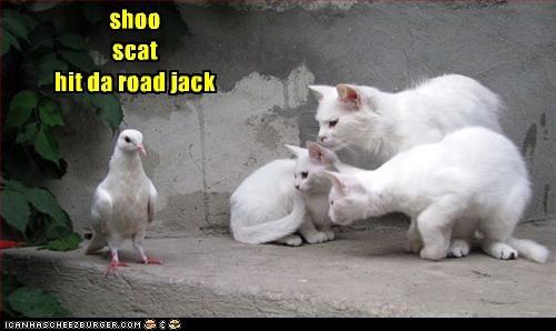 how about bark, bark shoo scat hit da road jack