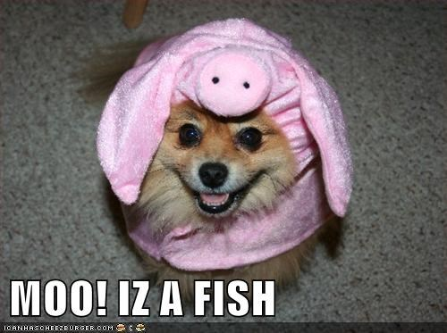 best of the week confused costume cow fish Hall of Fame happy dog pig pomeranian smile smiling - 5674123776