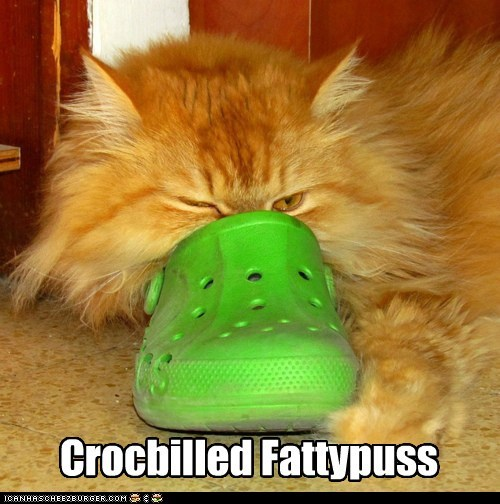 beak,bill,caption,captioned,cat,croc,fat,platypus,prefix,pun,tabby,TLL