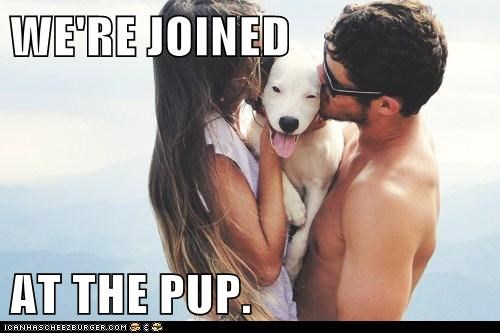 human humans joined at the pup KISS kisses love pit bull pitbill - 5674407680