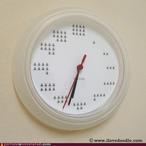 clock,insects,time flies,wtf