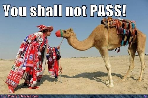 camels gandalf Lord of the Rings middle east you shall not pass - 5675544576