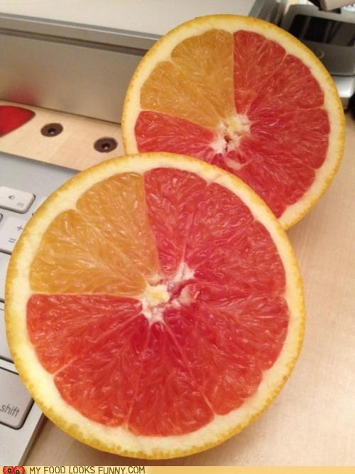 citrus grapefruit hybrid mix mutant orange weird - 5675898368