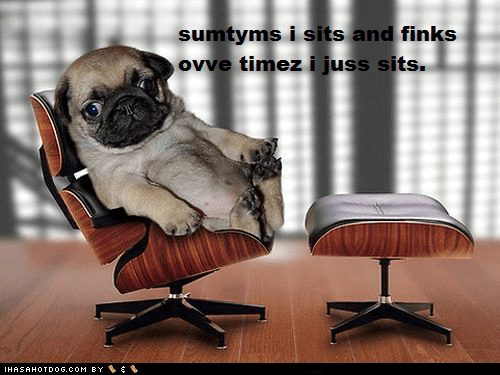 chair photoshopped pug puppy sit sitting think thinking - 5675970304