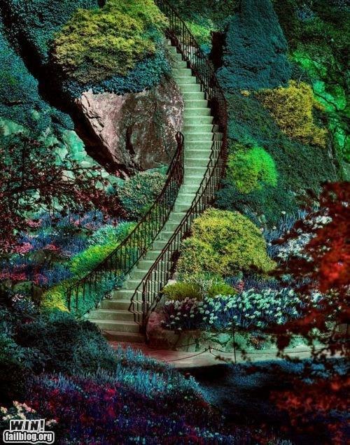 garden park photography pretty colors staircase - 5676289280