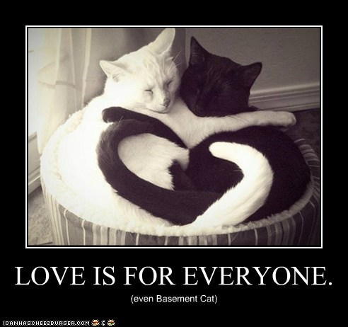 LOVE IS FOR EVERYONE. (even Basement Cat)