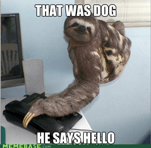 animals dogs Memes phone sloth - 5676689664