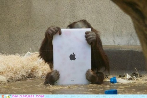 acting like animals,apple,facetime,ipad,orangutan