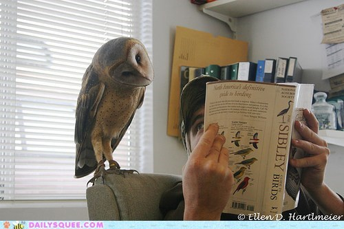 acting like animals,barn owl,book,disappointed,Hall of Fame,model,modeling,Owl,Photo,unflattering,upset