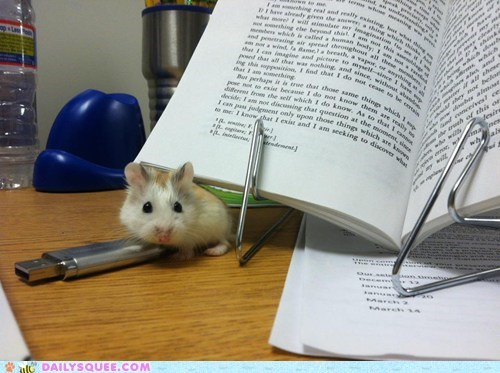 acquire,best headline ever,descartes,disregard,distracting,distraction,hamster,homework,reader squees,reading
