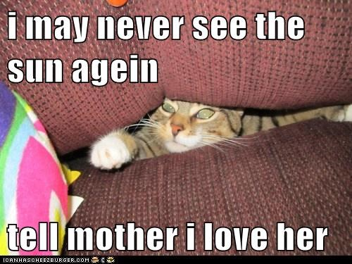 again,caption,captioned,cat,couch,Impending Doom,love,may,mother,never,request,see,sun,tell,trapped