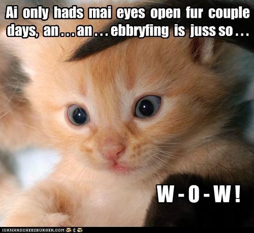 Ai only hads mai eyes open fur couple days, an . . . an . . . ebbryfing is juss so . . . W - O - W !