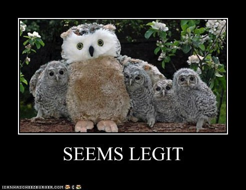 Babies,best of the week,caption,captioned,Owl,owlet,owlets,owls,replacement,stand in,stuffed animal