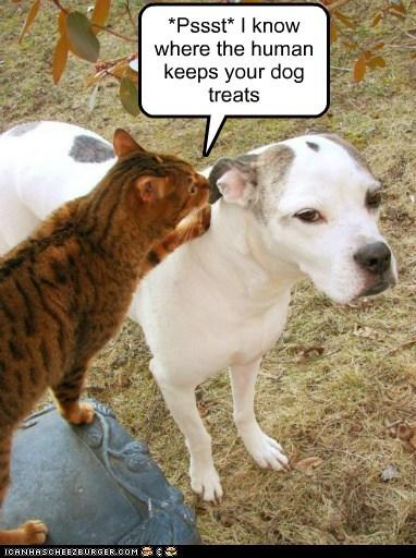 cat dont tell good noms mixed breed pit bull pitbull secret treats - 5679434240