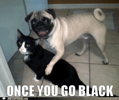 cat,dogs,i has a hotdog,innuendo,once you go black,pug,you never go back