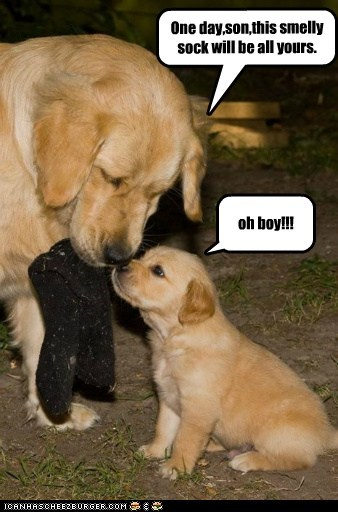 One day,son,this smelly sock will be all yours. oh boy!!!