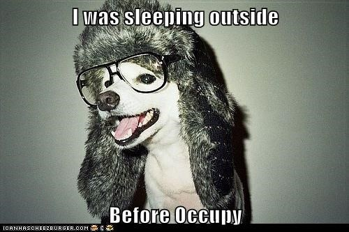 dogs,hipsterlulz,occupy wallstreet,poop