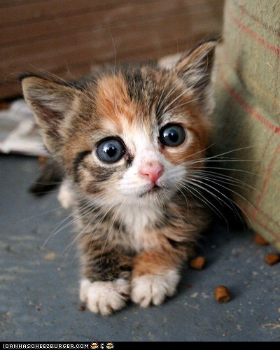 big eyes,blue eyes,cyoot kitteh of teh day,food,kitten,scared,tiny,wide eyed