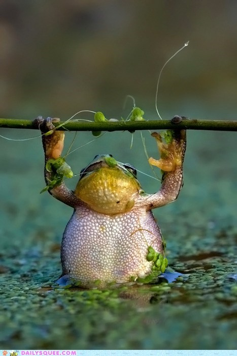 acting like animals,barbell,branch,frog,lifting,resemblance,strength,training,weight,working out